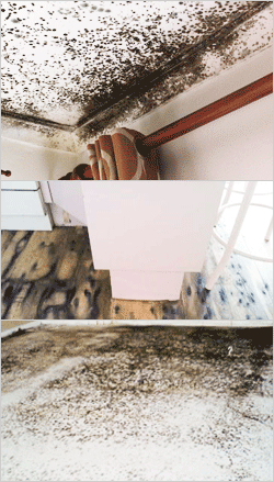How To Deal With Mould