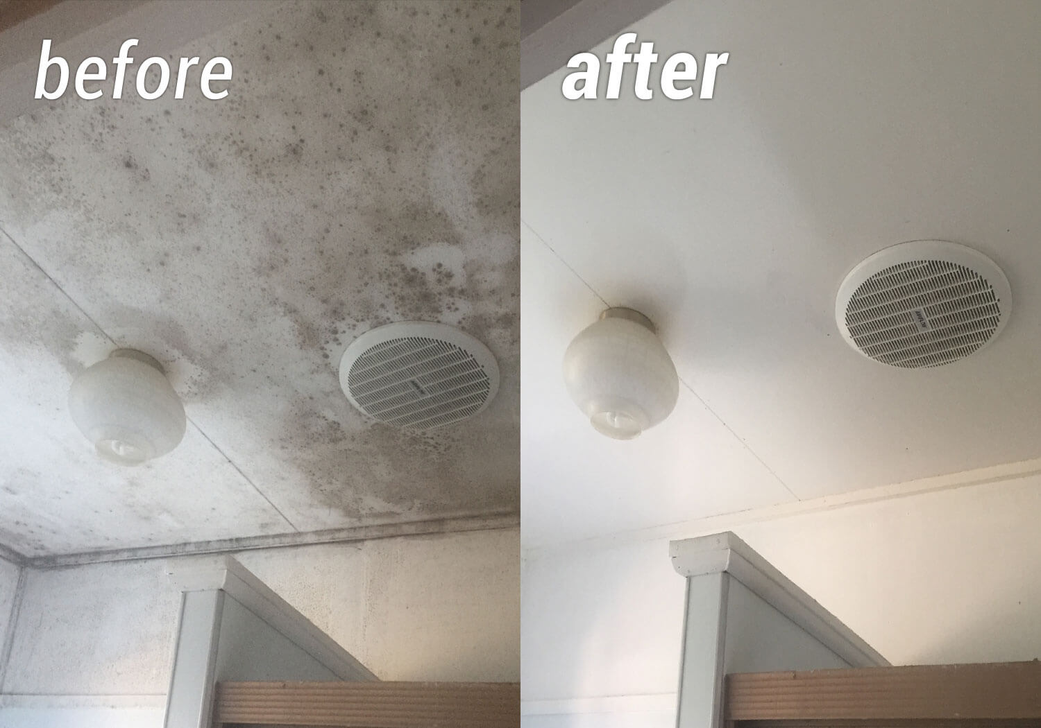 How to clean mold from ceiling blog avie for How to clean mold off bathroom walls and ceiling