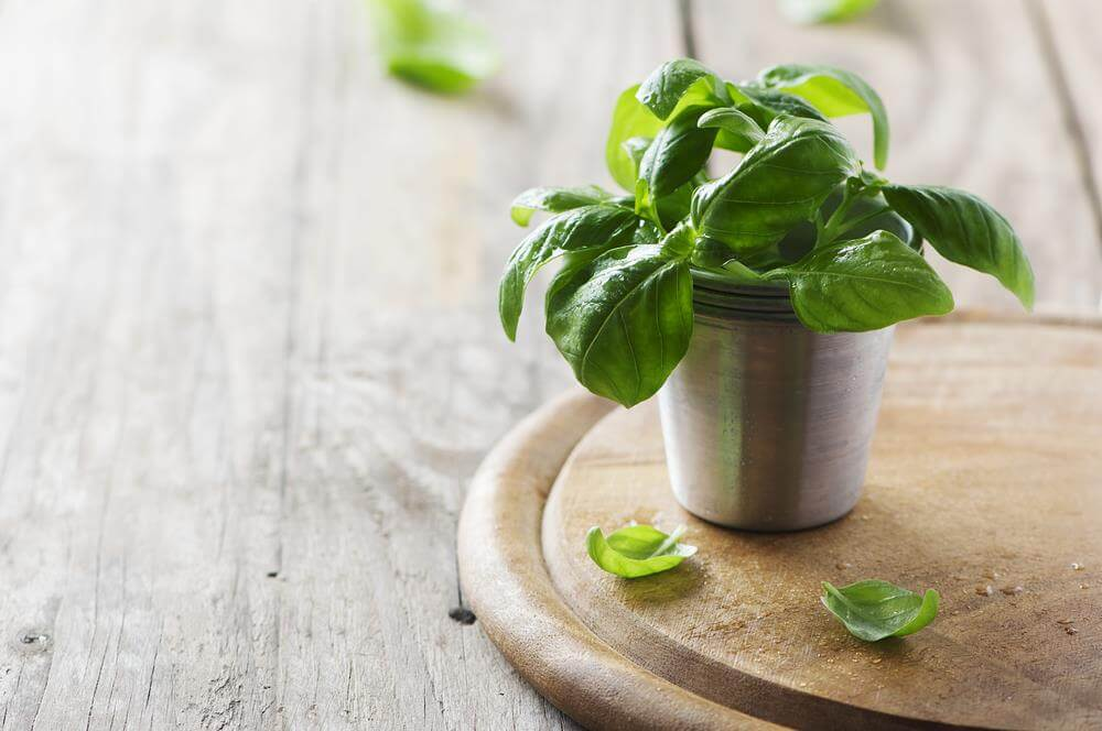 7 Indoor Plants that Repel Insects
